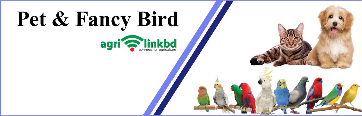 Pet & Fancy Bird