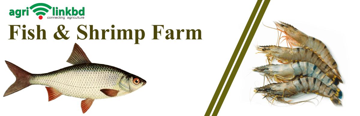 Fish & Shrimp Farm