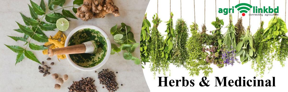 Herbs & Medicinal