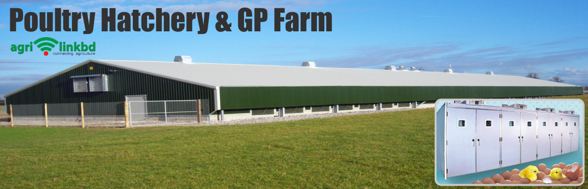 Poultry Hatchery & GP Farm