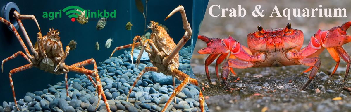 Crab & Aquarium